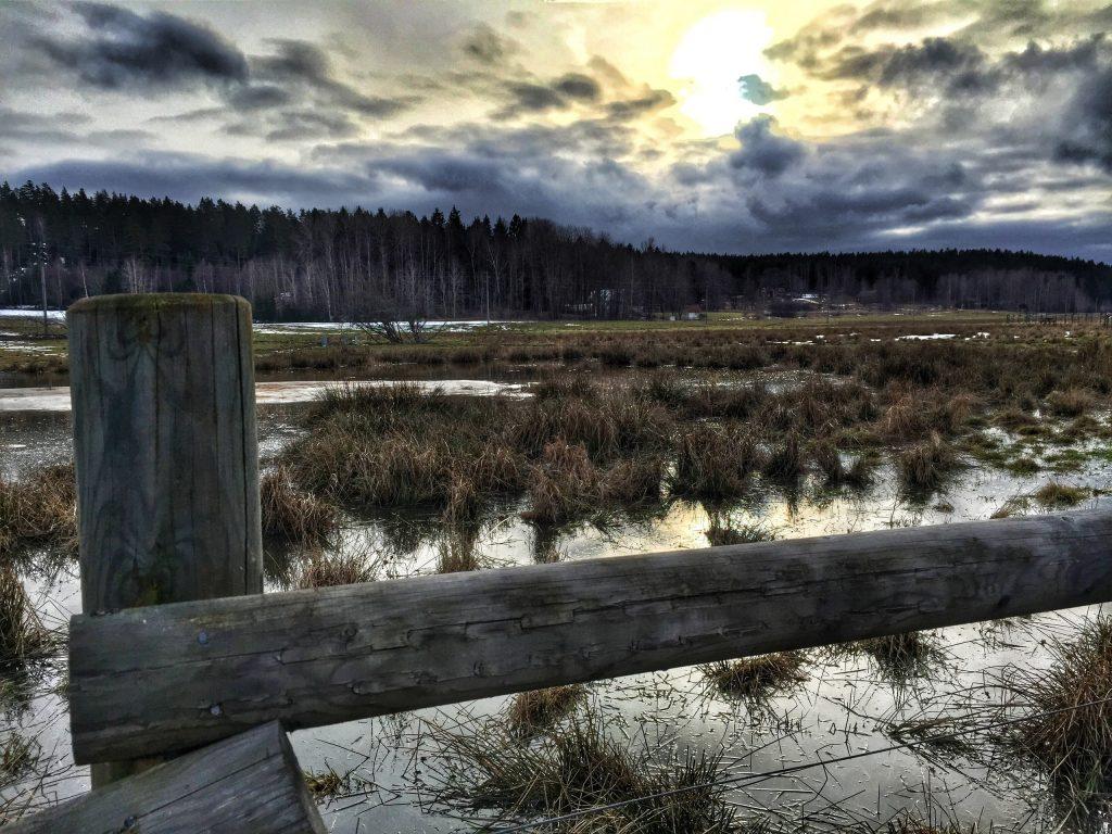 The Marschta Marsh